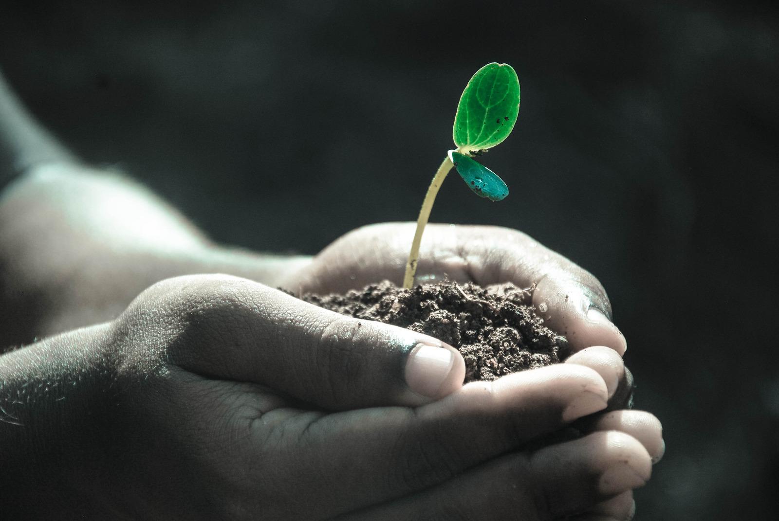 Foto von Pexels--2286921: https://www.canva.com/photos/MADQ4wPYyrY-hands-planting-seedlings/